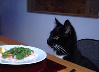 Nick Williams' cat